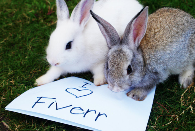 take HQ pictures of my pet rabbits or puppies with your personal message or site